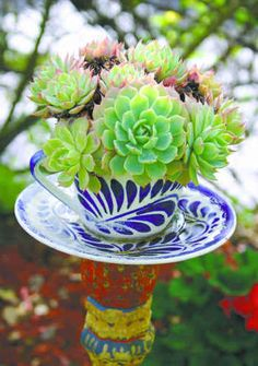 Mexican blue painted cup with succulents. These colors work!