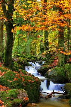 Nature shared by eladvi on We Heart It Fall Pictures, Nature Pictures, Beautiful Pictures, Beautiful Nature Wallpaper, Beautiful Landscapes, All Nature, Amazing Nature, Natur Wallpaper, Landscape Photography