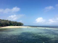 Great Barrier Reef なんなんだこの透き通る海ー綺麗すぎるー シュノーケリングを体験気持ちよすぎるー #greatbarrierreef #Cairns#Australia#sea#worldheritage#travel#GW #グレートバリアリーフ #ケアンズ #オーストラリア #海 #世界遺産 #サンゴ礁 #美しすぎる件 #キャラじゃないけど #泳いでみた #めっちゃ気持ち良い #海の水飲んだ #めっちゃしょっぱい #海外旅行 #オーストラリアの旅 by rinoooon_y http://ift.tt/1UokkV2