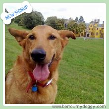 New sign-up alert – Saxon the German Shepherd Cross! He loves all types affection, especially in the form of tummy rubs ☺