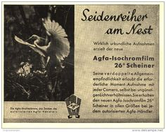 Original-Werbung/Inserat/ Anzeige 1933 - AGFA ISOCHROM-FILM / MOTIV SEIDENREIHER - ca. 140 x 110 mm