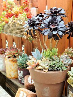 Propagating Succulents, Succulent Gardening, Garden Terrarium, Succulent Terrarium, Succulents In Containers, Cacti And Succulents, Planting Succulents, Garden Yard Ideas, Garden Art