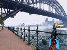 Three icons together at last.  #sydneyharbour #sydneyharbourbridge #sydneyoperahouse #harbourbridge #bridge #architecture #chewbacca #chewie #wookie #starwars #craft #design #bag #handmade #locallymade #gay #instagay #gaysydney #shoponline #kirribilli #giftideas #Sydney #Australia #Australianmade #potd #photooftheday #water by thescallywagsociety http://ift.tt/1NRMbNv
