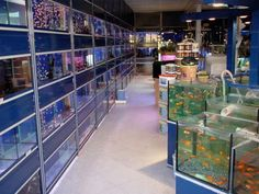 Aqua Picanço Forum Algarve The Loulé store is located on Andrade Avenue de Sousa, Shop 3 , opposite the BP pump, near the Modelo Continente, Pingo Doce and Lidl. This store has close to 600m2 and covers all branches: Aquariófilia, Dogs and Cats, Service of Baths and Shears, Rodents, Birds, Columbófilia.  ADDRESS:  Andrade Avenue de Sousa, store 3 8100 - 728 Loulé  TEL: 289 41 50 37  HOURS: Monday to Saturday from  10:00 ace  13:00 -  15:00 ace  19:00