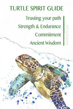 Turtle spirit animal guide for longevity, trusting out path, deep ancient wisdom and courage Turtle Spirit Animal, Animal Spirit Guides, Your Spirit Animal, Spirit Animal Totem, Turtle Symbolism, Animal Symbolism, Dragonfly Symbolism, Turtle Meaning, Turtle Quotes