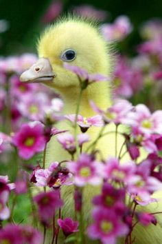 How adorable is #spring! www.digiwriting.com