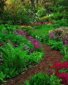 wood chip path through a flower bed