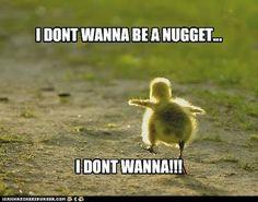 chicken nugget!