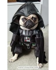 Darth Dog