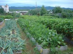 narrow vegetable lines Backyard Vegetable Gardens, Hobby Farms, Pergola Patio, Water Systems, Growing Vegetables, Amazing Gardens, Garden Design, Plants, Outdoor