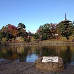 #奈良市 #猿沢池 #Nara #sarusawaike