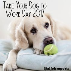 Today is Take Your Dog to Work Day. So enjoy the work day with your furry friend if you can!