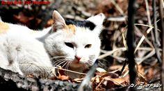 Korean wild(?) cat...^^;