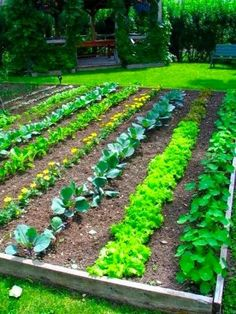 Another Really Nice Vegetable Garden