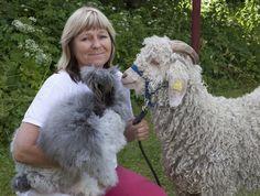 Gunilla har en egen djurpark för att kunna berätta om svensk ull