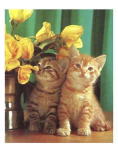 Two Kittens and Flowers Print by Pop Ink - CSA Images at Art.com