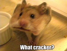 what cracker hamster