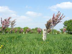 Cherry blossom garden https://www.wien.gv.at/umwelt/parks/anlagen/setagayapark.html
