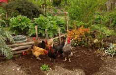 Things You Can Do To Be More Self-Sufficient :http://besurvival.com/homesteading/things-you-can-do-to-be-more-self-sufficient