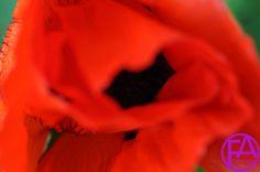 Makro-Blüte | FeenArt | Claudia Böttcher | DSC_6010FAFGk