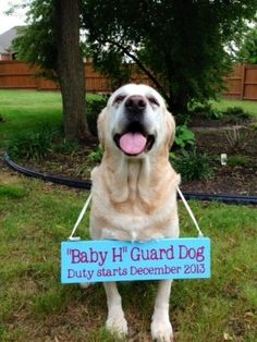 Dog baby announcement - really fun and different