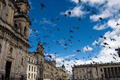 Você irá se encantar com nosso pacote compacto para Bogotá. Serão 5 dias incríveis, conhecendo os pontos mais visitados da cidade, como o Chorro de Quevedo, o local de fundação da cidade, o Museus de Botero, Plaza de Bolivar e a Catedral Primada. Todos os destinos, seu ponto de partida #seumelhordestino #ctoperadora #seupontodepartida #queroconhecer #bogotá #colômbia #chorrodequevedo #plazadebolivar #catedralprimada