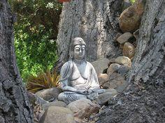 rocks, trees, calming presence