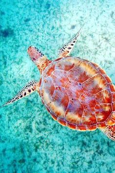 ~Sea Turtle - Harper's Bazaar The List, Hot Stops: 2014 -Queensland, Austraila | The House of Beccaria
