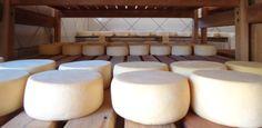 Rota do queijo em Minas Gerais tem até exemplar produzido em caverna -