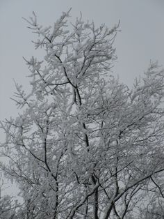 Branches II, Spring Snow, 2013