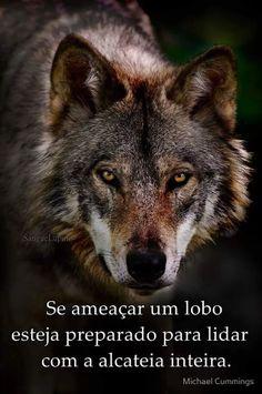 112 Melhores Imagens De Frases De Lobos Pretty Quotes Manager
