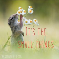 It's the small acts, like sharing a laugh with friend, gazing at the stars, or holding your lovers hand, that really make a life. Yes we all get to have the abundance that is our birthright but what if, #abundance is the sound of the birds outside your window, the trees blowing In the wind, or the long #hug you share with a friend…. #prestonSmilesQuotes #lovesVoice