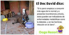 El Doc David Latorre nos entrega los mejores consejos.