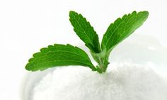 Stevia could CURE Lyme disease better than antibiotics | Daily Mail Online