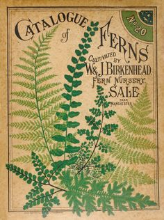"Items similar to Antique Botanical Print ""Catalogue of Ferns"" Vintage Woodland Floral Illustration - Green Sepia Art Nouveau Garden Print on Etsy. , via Etsy. Illustration Botanique, Illustration Blume, Botanical Illustration, Vintage Design, Vintage Images, Vintage Prints, Vintage Botanical Prints, Vintage Book Covers, Vintage Books"
