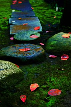 Have you thought about creating a little piece of zen in your own backyard? Moss garden at Kyu-Iwasaki-tei Garden in Tokyo, Japan. Photography by Doing Rei's on photohito Japanese Culture, Japanese Art, Temples, Japanese Garden Style, Japanese Gardens, Japon Tokyo, Kyoto Japan, Japan Garden, Moss Garden