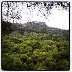Precioso bosque frondoso. Lovely lush forest. #bosque #forest #naturaleza #nature #senderismo #trekking