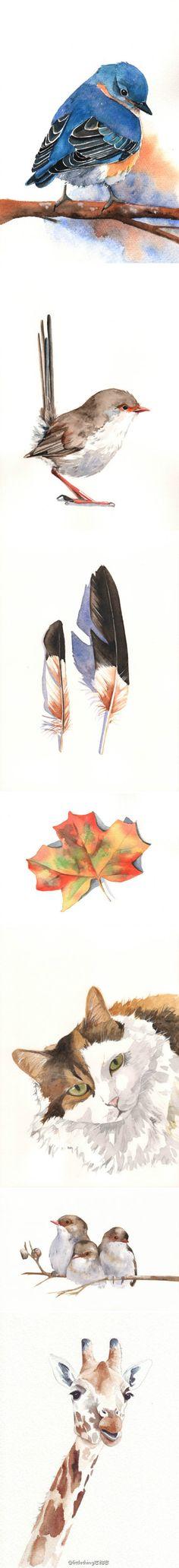 这些画就像是初夏的凉风般给人清爽的感觉~来自加拿大女画家Kathleen Maunder
