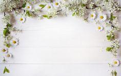Фото обои ветки, фон, ромашки, лепестки, декор, цветы белые