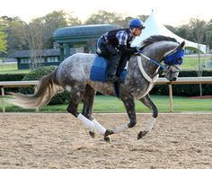 Creator(2013)(Colt) Tapit- Morena By Privately Held. 4(C)x5(C) To Mr Prospector, 5x5 To Northern Dancer. 12 Starts 3 Wins 4 Seconds 1 Third. $1,610,320. Won Belmont S(G1), Arkansas Derby(G1), 3rd Rebel S(G2).