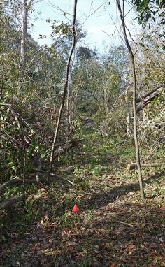 Gypsy's trail reroute after hurricane Matthew. 11/26/2016