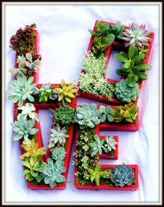 Succulent Monogrammed Planter made to order by RootedInSucculents via etsy