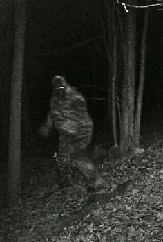 Excellent shot of a squatch. Pretty sure this is one of the best I've seen. Great eye shine. Huge body mass. Awesome !