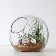 Terrariums!! Not specifically this Star Wars one, but any in a dome or cone glass shape preferred :)