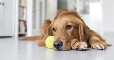 Depressed Pets: How to Help a Dog with Depression | Top Dog Tips