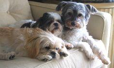 Jack, Penelope and Thorp