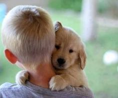 Cutest little puppy