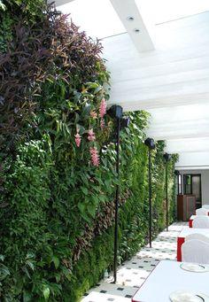 lush green wall in restaurant