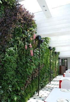 lush green wall in restaurant