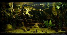 orinoco aquarium plants - Google Search